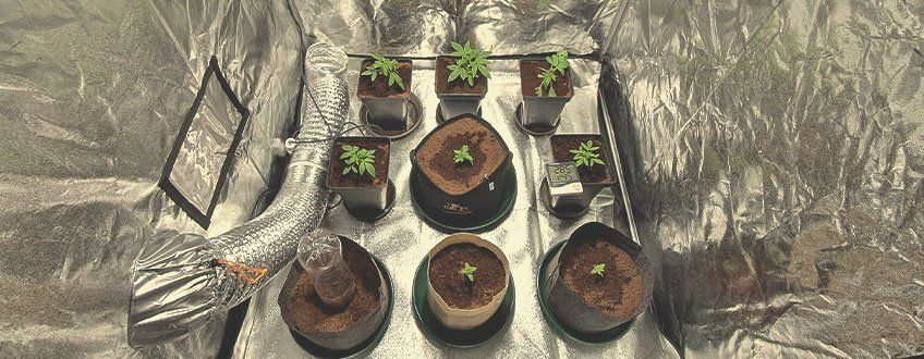 guide-to-sustainable-cannabis-growing.jpg