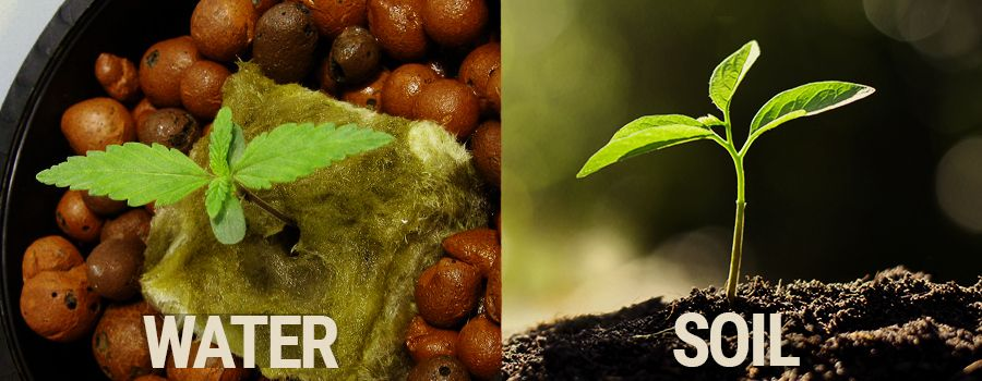 hydro-vs-soil-cannabis-grow-which-is-better.jpg