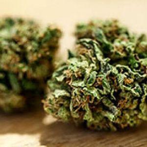 tasmaniamedicalcannabis